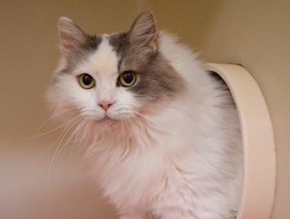 Ark-Valley Humane Society and Heart of the Rockies Radio Pet of the Week