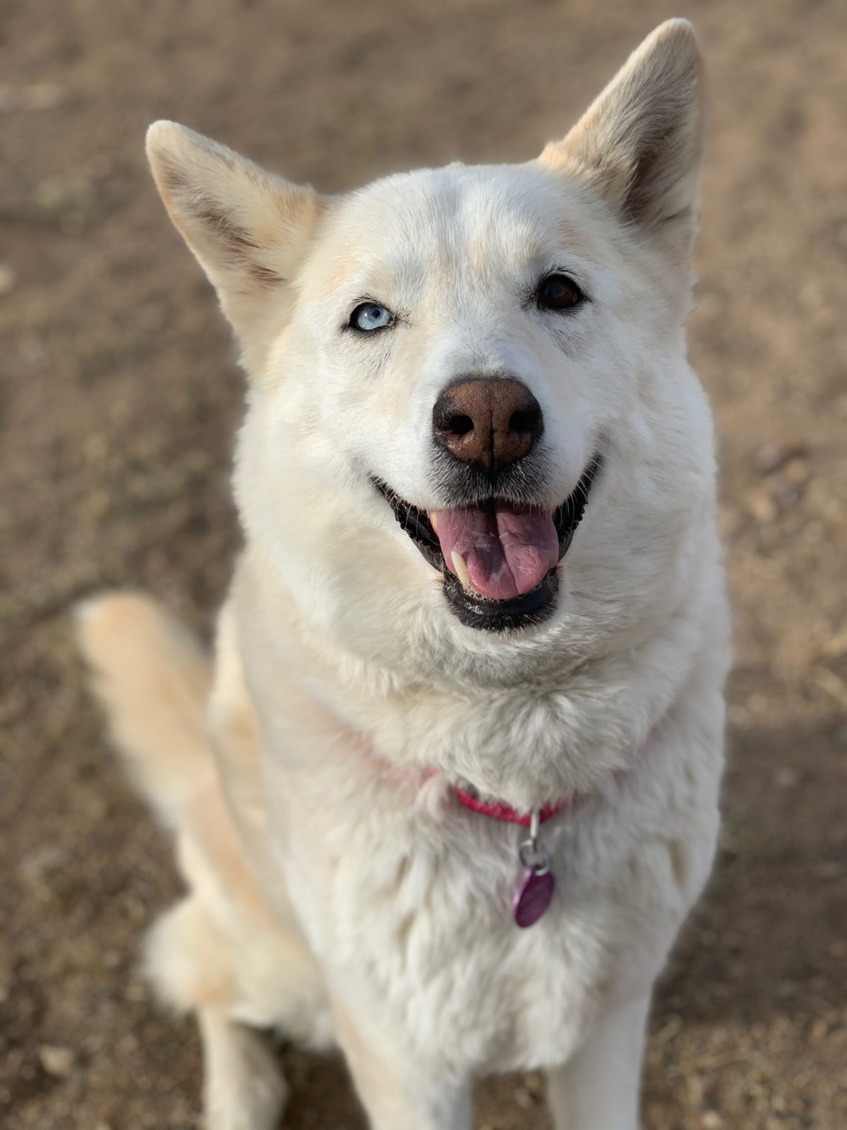 HAS BEEN ADOPTED! Ark-Valley Humane Society and Heart of the Rockies Radio Pet of the Week