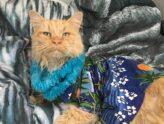 Orange Cat in Hawaiian shirt