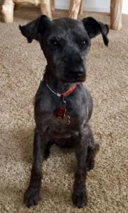 Pip, dog of author Judy