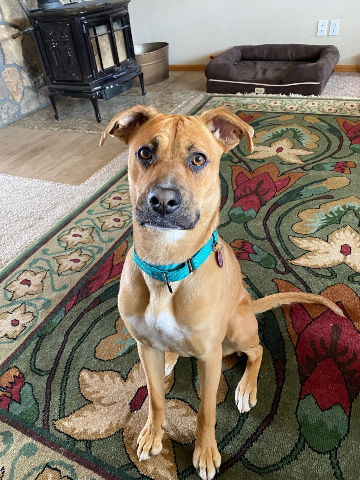 Collars, tags and chips needed to return lost pets