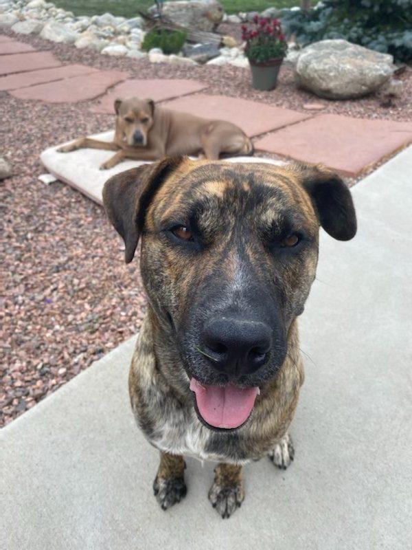 Pet of the Week - Heart of the Rockies Radio