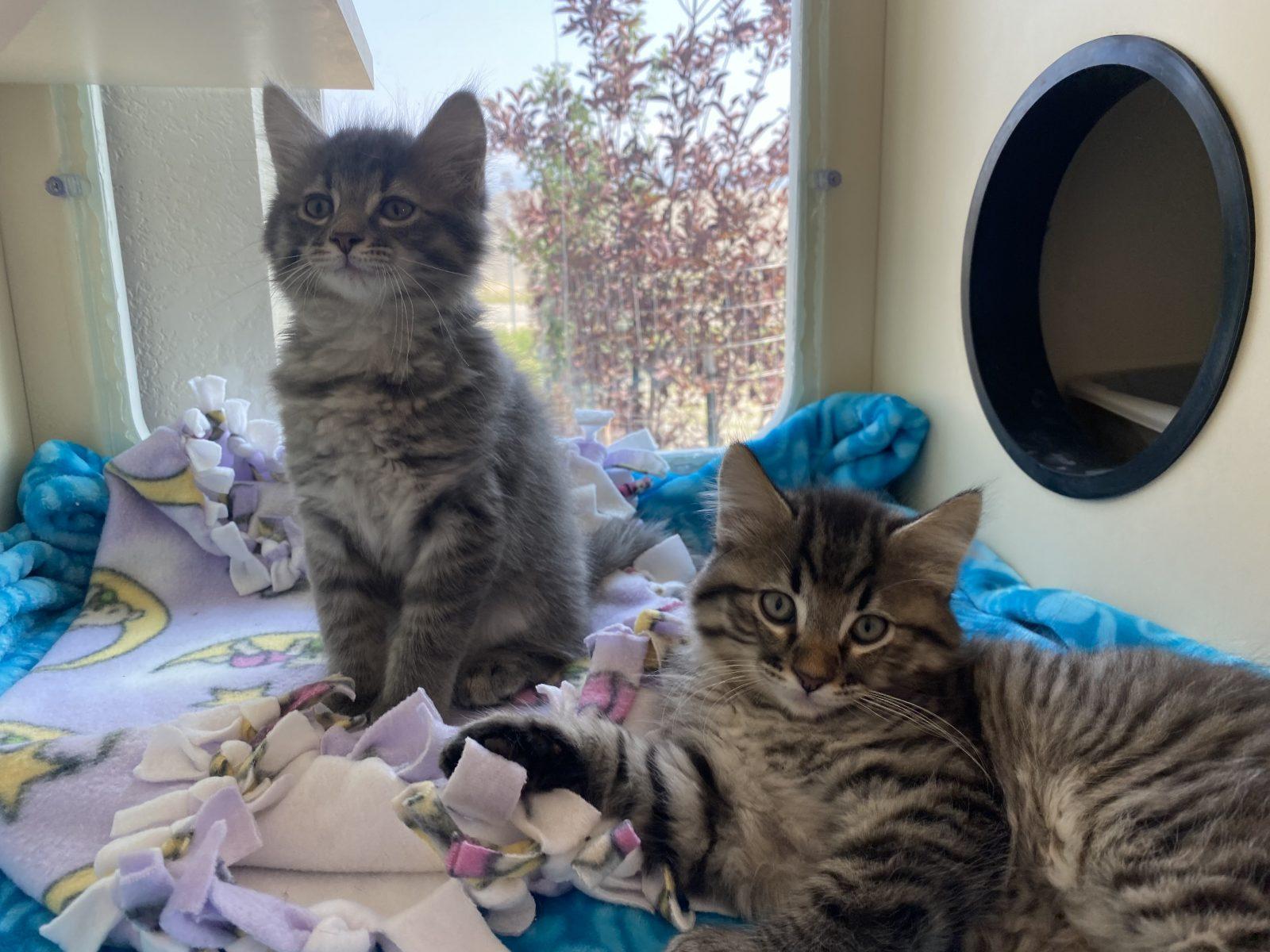 Found Kittens Outside?